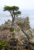 Lone Cypress - 17 Mile drive (15)
