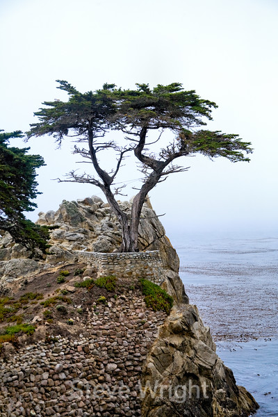 Lone Cypress - 17 Mile drive (21)