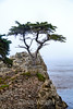 Lone Cypress - 17 Mile drive (21)