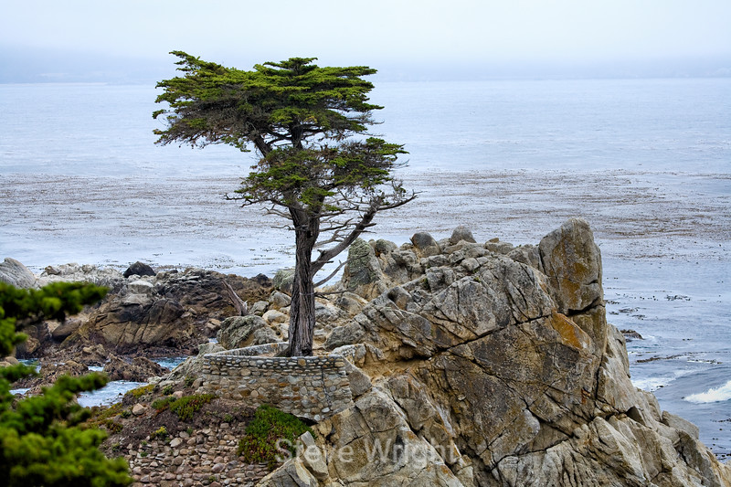 Lone Cypress - 17 Mile drive (2)