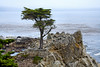 Lone Cypress - 17 Mile drive (2)