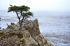 Lone Cypress - 17 Mile drive (20)