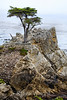 Lone Cypress - 17 Mile drive (17)