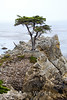 Lone Cypress - 17 Mile drive (23)