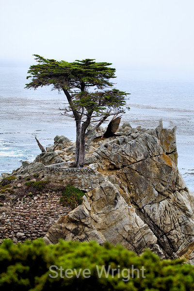 Lone Cypress - 17 Mile drive (10)