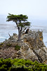 Lone Cypress - 17 Mile drive (10)