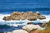 Pacific Grove Coastline #7541