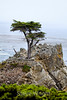 Lone Cypress - 17 Mile drive (9)