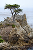 Lone Cypress - 17 Mile drive (19)