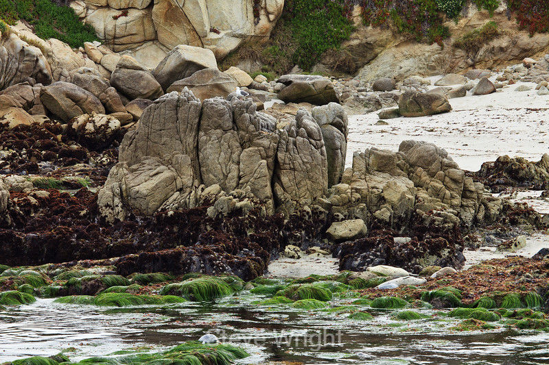 Pacific Grove Coastline #6846