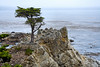 Lone Cypress - 17 Mile drive (1)