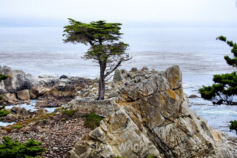 Lone Cypress - 17 Mile drive (8)