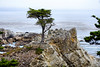 Lone Cypress - 17 Mile drive (8)