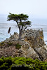 Lone Cypress - 17 Mile drive (12)