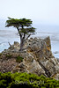 Lone Cypress - 17 Mile drive (14)