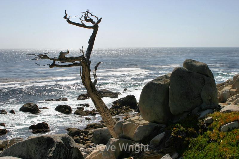 Beach - 17 Mile Drive (42) D
