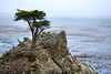 Lone Cypress - 17 Mile drive (18)