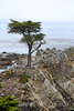 Lone Cypress - 17 Mile drive (3)