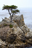 Lone Cypress - 17 Mile drive (22)
