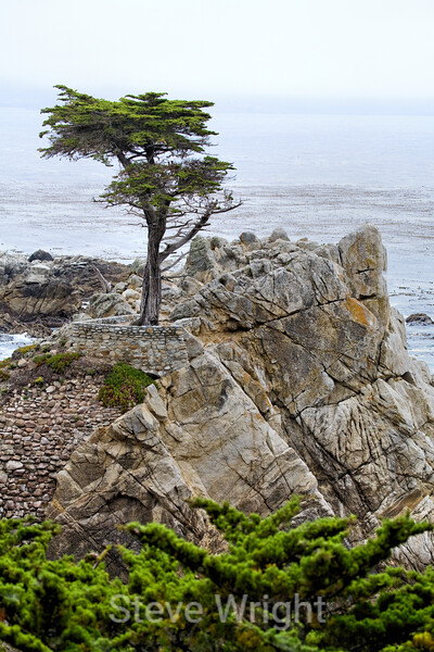 Lone Cypress - 17 Mile drive (4)