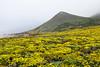 Wildflowers & Coast - Garrapata #9799