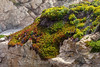 Wildflowers & Coast - Garrapata #9608