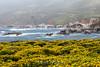 Wildflowers & Coast - Garrapata #9713