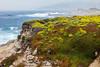 Wildflowers & Coast - Garrapata #9805