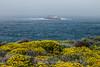 Wildflowers & Coast - Garrapata #9535