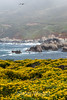 Wildflowers & Coast - Garrapata #9714