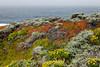 Wildflowers & Coast - Garrapata #9485