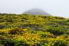 Wildflowers & Coast - Garrapata #9672