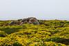 Wildflowers & Coast - Garrapata #9826