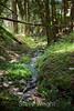 Sobranes Creek - Garrapata (48)