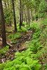 Sobranes Creek - Garrapata (89)