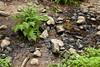 Sobranes Creek - Garrapata (78)
