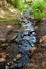 Sobranes Creek - Garrapata (103)