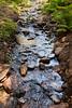 Sobranes Creek - Garrapata (41)