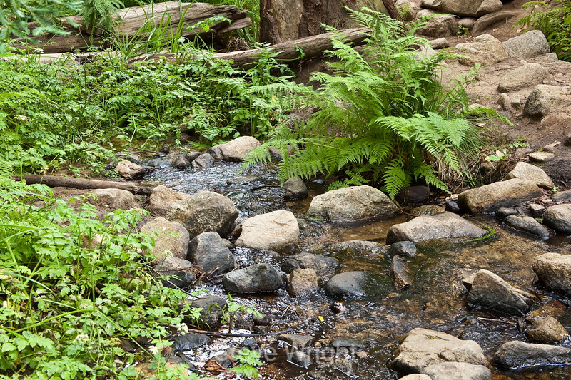 Sobranes Creek - Garrapata (79)