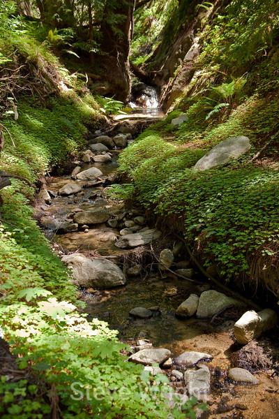 Sobranes Creek - Garrapata (69)