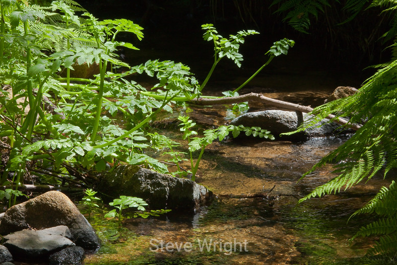 Sobranes Creek - Garrapata (22)