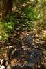 Sobranes Creek - Garrapata (24)