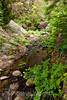 Sobranes Creek - Garrapata (91)