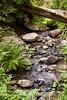 Sobranes Creek - Garrapata (77)
