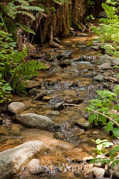 Sobranes Creek - Garrapata (44)