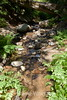 Sobranes Creek - Garrapata (65)