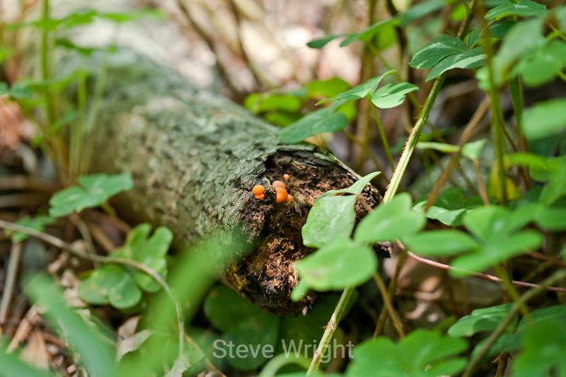 Fungi - Garrapata (1)