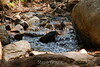 Sobranes Creek - Garrapata (10)