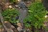 Sobranes Creek - Garrapata (8)