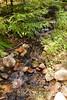 Sobranes Creek - Garrapata (42)